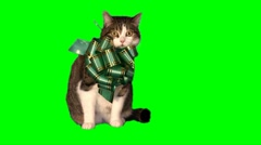 Cat-present 02 (green bow) Stock Footage