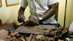 Manufacturing of cigars. cuba. Stock Footage