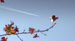 Condensation trails with autumn leaf Stock Footage