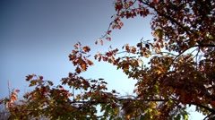 A young tree in the autumn - stock footage