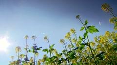 Rape field with a sunbeam Stock Footage