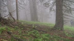 Walking in fog Stock Footage