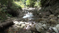 Stock Video Footage of rivulet in mountain forests
