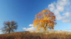 Autumnal trees Stock Footage