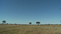 Botswana Landscape Stock Footage