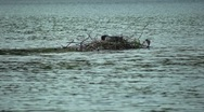 Coot Island Stock Footage