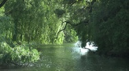 Stock Video Footage of Water, Willows, Wind