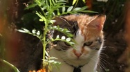Stock Video Footage of cat lying in grass on a sunny day