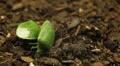 Macro, Green Beetles HD Footage
