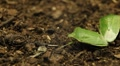 Macro, Green Beetles Footage