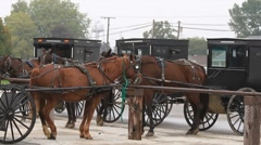 Amish buggies parked in a row Stock Footage