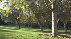 Scenic park with leaves moving gently - stock footage