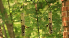 Goldfinches at bird feeders Stock Footage