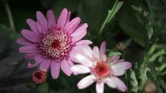 Purple flowers in breeze, spots of sunlight - SEAMLESS loop 1080p Stock Footage