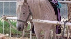 Cute White Pony Stock Footage