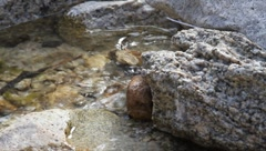 Rock in stream at Rattlesnake Canyon in Joshua Tree Stock Footage