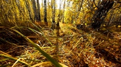 Autumn forest 4 Stock Footage