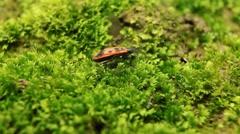 Stock Video Footage of Macro, Red Beetles