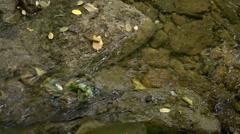 Slug on a rock Stock Footage