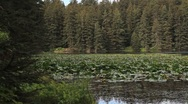 Stock Video Footage of Alaskan Lake Lily Pads
