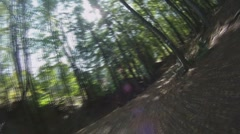 POV - drive on road through forest Stock Footage