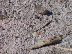 Dead fish at the Salton Sea Stock Footage