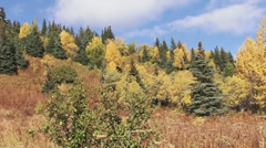 Fall Colors on Hillside - pan right Stock Footage
