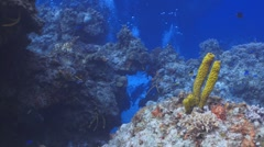Caribbean reef, yellow tube sponge and tropical fish Stock Footage