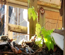 Leaves inside the abandoned Lambertville High School - stock footage