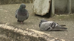 Two pigeons on a bridge Stock Footage