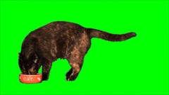 Dissatisfied cat eats - stock footage