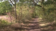 Path in a woodland on an autumn day Stock Footage