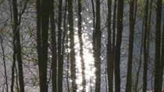 Autumn Aspen Poplars in the Rocky Mountains Stock Footage