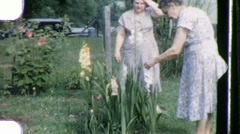 Flower Rose Gardening Circa 1955 (Vintage 8mm Home Movie Footage) 842 Stock Footage