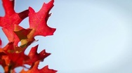 Stock Video Footage of Fall Leaves and Sky: Background