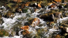 Creek Bed Stock Footage