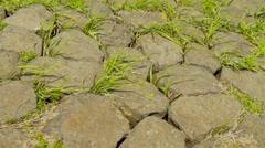 Grass growing between boulders Stock Footage