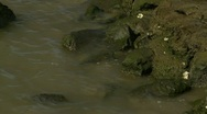 Stones in the Water Stock Footage