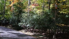 Ride on a county road Stock Footage