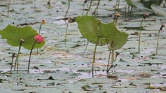 Rain on the bog - stock footage