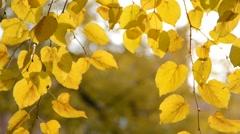 autumn leaves - stock footage