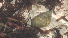 Large hermit underwater hdi Stock Footage