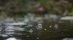 Raindrops on a Fishpond Stock Footage