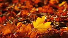 Stock Video Footage of autumn foliage