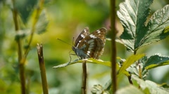 Mountain butterfly Stock Footage