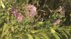 Wild Flowers In The Wind 2 Stock Footage