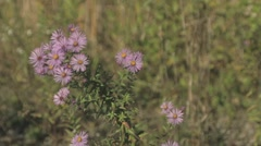 Wild Flowers In The Wind 1b Stock Footage