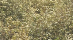 Wild Flowers in Field 1a Medshot Stock Footage