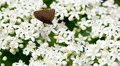 butterfly creeps on white colors Footage
