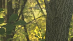 Mid Section of Tree in Forest 1 Stock Footage